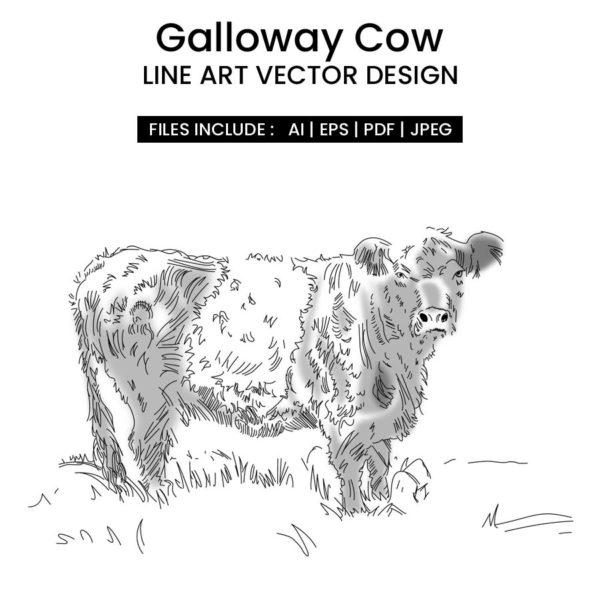 Galloway Cow