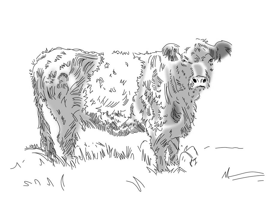 Cow-After